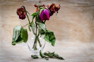 wilted roses in a vase